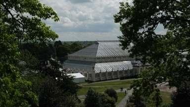 Jardim Botânico de Londres conta com brasileiros na preservação de espécies - Kew Garden possui um vasto acervo da flora de todo o mundo.