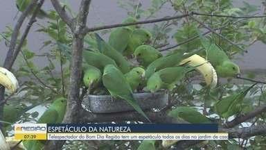 Telespectador de Itanhaém mostra seu jardim cheio de maritacas - O morador assiste o Bom Dia Região todos os dias e a repórter Carol Ianelli foi conhecê-lo.