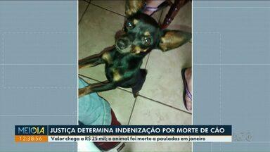 Justiça determina indenização de R$ 25 mil por morte de cão - Animal foi morto a pauladas em janeiro deste ano em Maringá.