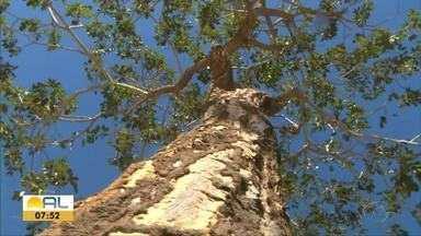 Chapada das Mesas é um dos destinos mais procurados nas férias de julho - Um dos destinos mais procurados no Maranhão.