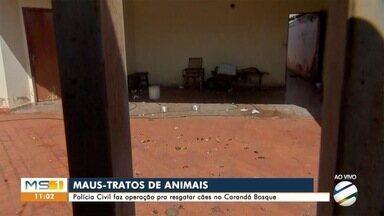 Polícia faz operação contra maus-tratos a cachorros em bairro nobre da Capital - Foram resgatados 9 cachorros em situação de abandono.