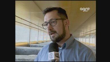 NSC TV Chapecó lança projeto Agro 4.0; confira terceira reportagem - NSC TV Chapecó lança projeto Agro 4.0; confira terceira reportagem