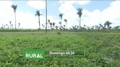 Veja os destaques do 'Mirante Rural' - Programa voltado para as notícias do agronegócio é apresentado todo domingo pela TV Mirante.
