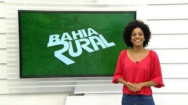 Confira a previsão do tempo para a cidade de Itapeting, na região sul da Bahia - A preciptação pluviométrica ajudou a pecuária local.