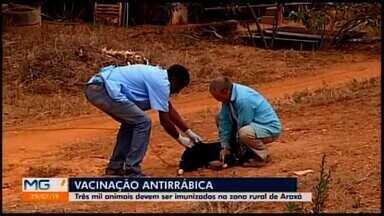 Campanha de Vacinação Antirrábica começa nesta segunda-feira em Araxá - Expectativa é que mais de 3 mil animais sejam vacinados.