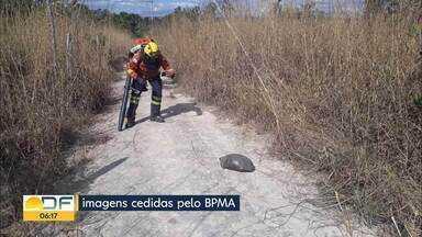 Policiais ambientais resgataram três animais silvestres de incêndio florestal - Fogo atingiu Estação Ecológica Águas Emendadas, em Planaltina.