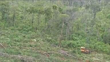 Governo anuncia que vai mudar monitoramento do desmatamento da Amazônia - O ministro do Meio Ambiente se reuniu com técnicos do Ibama e do Inpe e disse que o Deter - que usa imagens de satélites analisadas pelo Inpe - apresenta falhas.