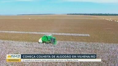 Algodão é a nova aposta de produtores de Rondônia - Estado é o terceiro maior produtor da pluma na Região Norte.