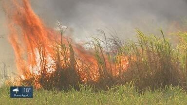 Produtores e PM usam tecnologia para evitar incêndios na região de Ribeirão Preto - Drones viraram importantes ferramentas no combate às queimadas.