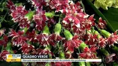 O mercado de flores está sempre em evolução e mostrando novidades - Saiba diferenciar alguns tipos especiais de plantas para seus ambientes