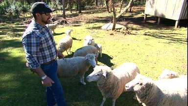 Assista ao bloco 02 do Caminhos do Campo do dia 11 de agosto de 2019 - Conheça a história da família Santos que começou a criar ovelhas para comercializar a carne, mas hoje nenhum animal é abatido e o rebanho não para de crescer