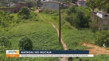 Moradores do Conjunto Mucajá reclamam de mato alto e falta de limpeza no residencial - Moradores do Conjunto Mucajá reclamam de mato alto e falta de limpeza no residencial