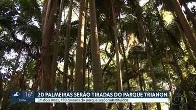 Palmeiras começam a ser retiradas do Parque Trianon nesta segunda-feira - Remoção de 20 palmeiras é o início de um processo longo para substituir, no total, 750 árvores. O parque tem 48 mil metros quadrados de área verde, grande parte remanescente da Mata Atlântica.