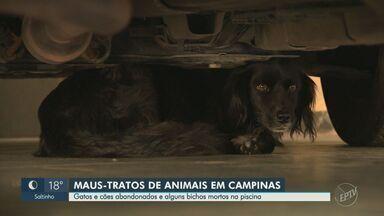 Guarda Municipal encontra cachorros mortos dentro de casa abandonada em Campinas - Corporação ainda localizou outros nove cães abandonados. Gatos também foram achados dentro da residência.