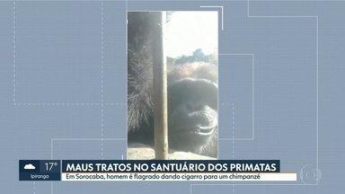 Homem é flagrado dando cigarro a chimpanzé em santuário dos primatas, em Sorocaba - Ministério Público vai investigar maus tratos ao animal.