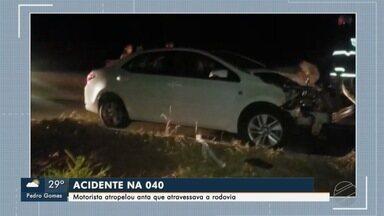 Polícia orienta sobre o risco de acidentes com antas na MS-040 - Homem ficou ferido após atropelar animal nesta madrugada