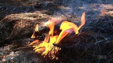 Fogo subterrâneo chama a atenção de moradores de Santa Maria do Oeste, no Paraná - Segundo especialista, o fogo atinge material combustível abaixo da terra.