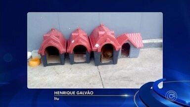 Gerente de posto de combustíveis coloca casas para cachorros abandonados na SP-79 - O gerente de um posto de combustíveis que fica SP-79 colocou casinhas para cachorros que foram abandonados na rodovia.