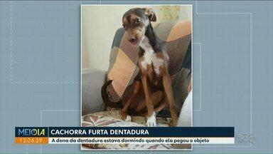 Cachorra pega dentadura enquanto a avó de sua dona dormia - Isso aconteceu em Ponta Grossa.