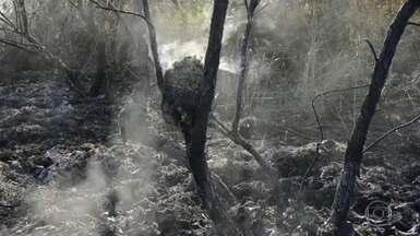 Em agosto, o número de focos de queimadas foi o triplo do observado há um ano - Governadores da região cobraram do Governo Federal medidas de combate ao fogo e ao desmatamento.