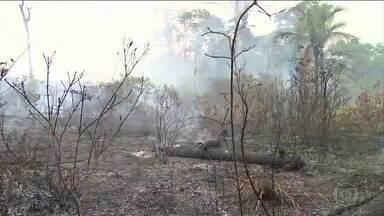 Setembro começa com quase mil focos de queimadas na Amazônia, segundo o Inpe - Exército começa na quarta-feira (4) o combate ao fogo no sul do Amazonas, uma das regiões mais atingidas pelas queimadas. Os incêndios voltaram com força também em Mato Grosso.