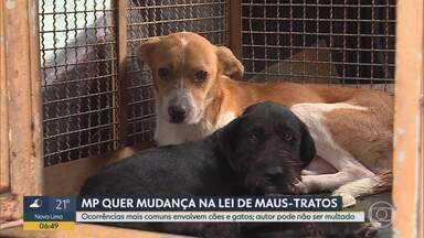 MP quer mudança em lei estadual que impede multa a quem maltrata animais domésticos - Ocorrências mais comuns envolvem cães e gatos.