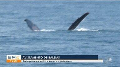 Passeio leva turistas até alto mar para que possa ver baleias em Porto Seguro - Durante este período do ano os animais se aproximam da costa brasileira.