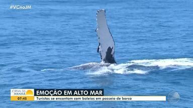Temporada de aparecimento das baleias jubarte atrai turistas para Porto Seguro - Animais também já apareceram em outras regiões do país. Eles vêm para a região para reproduzir.