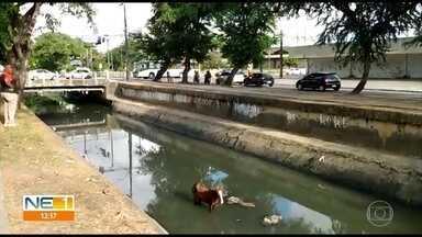Cavalo cai em canal do Arruda e é resgatado por bombeiros - Animal foi retirado do local sem ferimentos.