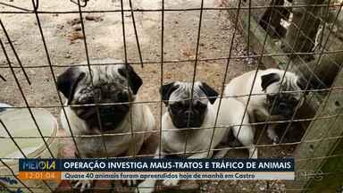 Operação que investiga maus-tratos e tráfico apreende quase 40 animais em Castro - Pelo menos 20 cães de raça e 15 aves calopsitas foram apreendidas.