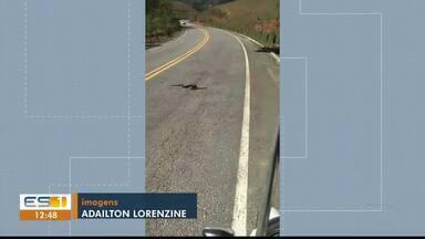 Motorista registra cobra atravessando rodovia que liga Cachoeiro a Muqui, no Sul do ES - Ela atravessou a pista e voltou para uma área de vegetação.