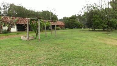 Assista ao bloco 02 do Caminhos do Campo do dia 15 de setembro de 2019 - Casal de engenheiros agrícolas muda a forma de explorar a terra e inspira visitantes em sua propriedade