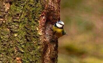 Assista ao Terra da Gente na íntegra (14/09) - Observação de aves na Holanda e atendimento médico aos ribeirinhos no rio Tapajós são destaques.