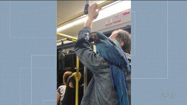 Arara é flagrada no ombro de um passageiro dentro de um ônibus em Curitiba - A espécie é ameaçada de extinção. Esse é um dos destaques do G1 Paraná.