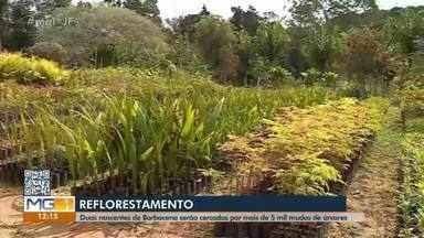 Cinco mil mudas de árvores serão plantadas em Barbacena para recuperação de nascentes - O plantio está programado para ocorrer no dia 28 de setembro.