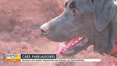 Cães farejadores ajudam Bombeiros durante as buscas em Brumadinho - Bombeiros e cães procuram os 21 desaparecidos, em meio aos rejeitos da lama, em Brumadinho.
