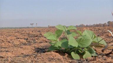 Perto de começar o plantio produtores ainda precisam recuperar lavouras queimadas - A falta da palhada de milho é um dos principais prejuízos para o solo e para as sementes.
