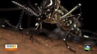 Dengue: casas abandonadas são um risco à saúde pública - Dengue: casas abandonadas são um risco à saúde pública.