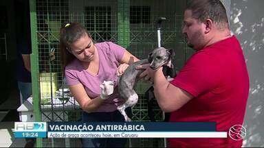 Aniimais são vacinados durante o sábado em Caruaru - 23 bairros foram contemplados