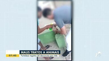 Fortaleza tem 36 denúncias de maus-tratos a animais por mês - Saiba mais em g1.com.br/ce