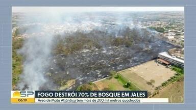 Fogo destrói 70% de bosque em Jales - Área de Mata Atlântica tem mais de 200 mil metros quadrados.