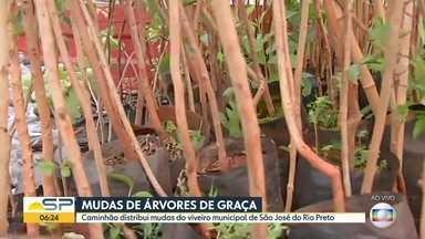 Mudas de árvore de graça em São José do Rio Preto - Evento marca a comemoração do dia mundial da árvore (21/09).