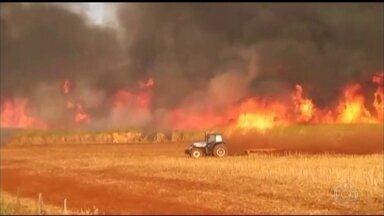 Queimadas destroem mais de 20 mil hectares de vegetação no sudoeste de Goiás - Só nos últimos quatro dias os focos de incêndio consumiram mais de 20 mil hectares de vegetação no sudoeste do estado. Três pessoas foram presas esta semana acusadas de causarem incêndios criminosos.