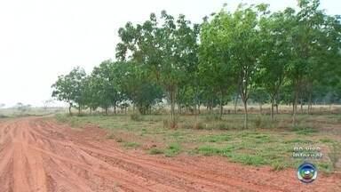 Rio Preto realiza plantio de mais de 3 mil mudas de árvores - São José do Rio Preto (SP) vai realizar o plantio de mais de 3 mil mudas de árvores em comemoração ao Dia da Árvore.