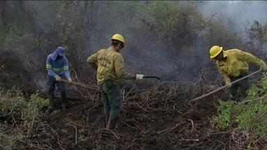 Bombeiros de Brasília dão apoio a combate aos incêndios no Pantanal - Estado de Mato Grosso decretou emergência e pediu ajuda aos bombeiros do DF. Eles identificam os focos com ajuda de satélite.