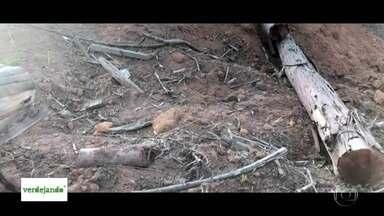 São Paulo perdeu 500 mil árvores em 5 anos - O desmatamento avança em áreas de manancial.