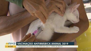 Campanha de Vacinação Antirrábica Animal 2019 é lançada em Manaus - Campanha pretende vacinar 80% da população canina e 100% da população felina de Manaus.