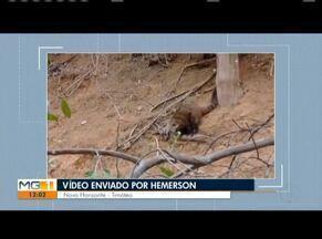 VC no MG: Confira os vídeos enviados pelos telespectadores - Moradora de Açucena reclama de falta de infraestrutra em estadas da cidade.