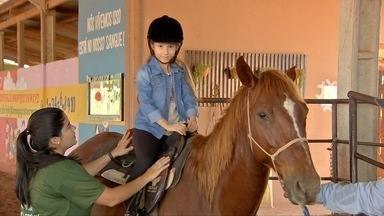 Os cuidados e a escolha dos cavalos usados em terapias - Os animais passam por treinamentos e períodos de descanso para que possam ter bom desempenho nas atividades.