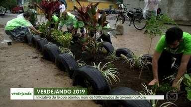 Iniciativa da Globo leva voluntários a plantar mil mudas de árvores e flores na Maré - O Verdejando é uma iniciativa da Globo para conscientizar a população sobre a importância do verde nos centros urbanos. É a segunda edição do projeto no Rio.